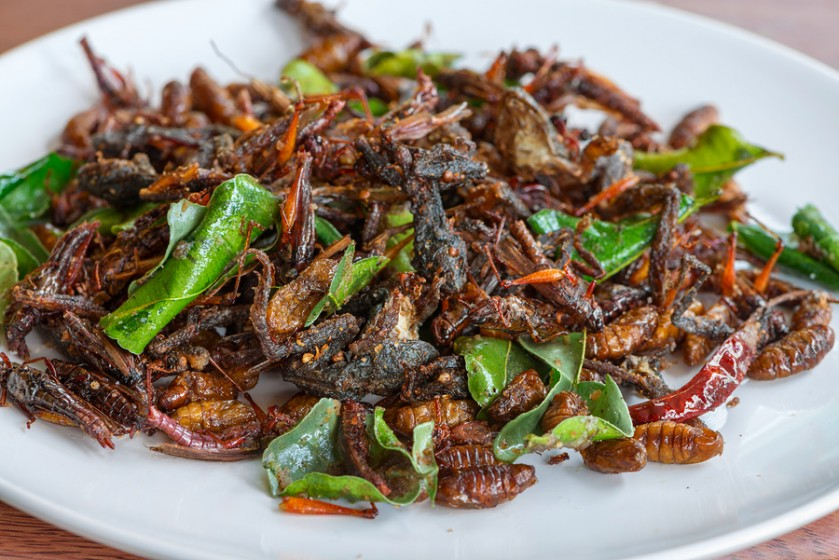 the benefits of eating insects From a health and sustainability perspective, there's a lot to like about eating  insects learn more about the health benefits of eating insects.