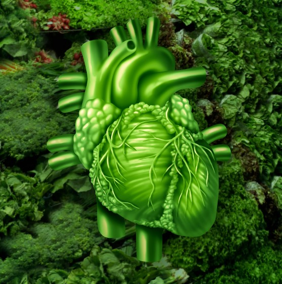 Foods Proven To Boost Blood Circulation And Red Blood Cell Regeneration  U2013 Healthy Diet Base