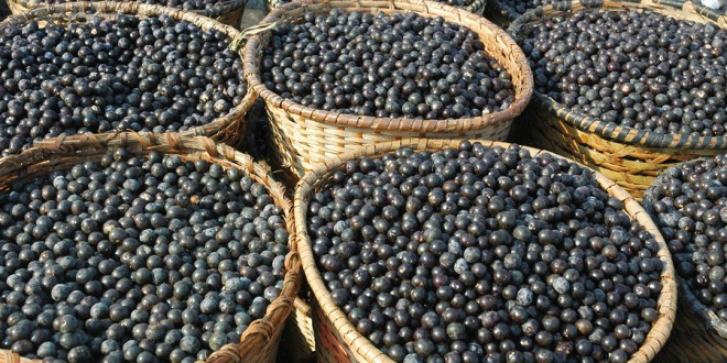 The Science on Açaí Berries | NutritionFacts.org